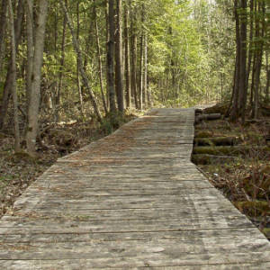 A boardwalk on the Garry Fen Trail, part of the Glengarry Trails in North Glengarry.